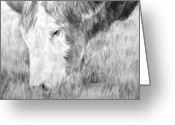 Livestock Drawings Greeting Cards - Graze Greeting Card by Meagan  Visser