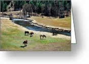 Colorado Mixed Media Greeting Cards - Grazing 2 Greeting Card by Angelina Vick
