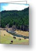 Colorado Mixed Media Greeting Cards - Grazing 3 Greeting Card by Angelina Vick