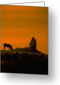 Gloaming Greeting Cards - Grazing horse at at abby ruin Greeting Card by Carl Purcell