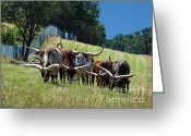 Curved Horns Greeting Cards - Grazing Greeting Card by Methune Hively