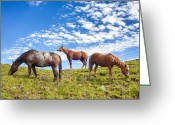 Blue Blood Greeting Cards - Grazing Greeting Card by Semmick Photo