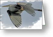 Great Blue Heron Digital Art Greeting Cards - Great Blue Heron Flight Greeting Card by Larry Linton