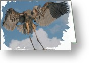 Great Blue Heron Digital Art Greeting Cards - Great Blue Heron Landing Greeting Card by Larry Linton