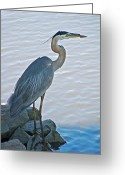 Great Greeting Cards - Great Blue Heron Portrait Greeting Card by Suzanne Gaff