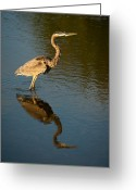 Onyonet Photo Studios Greeting Cards - Great Blue Heron Reflection Greeting Card by  Onyonet Photo Studios