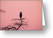 Great Blue Heron Digital Art Greeting Cards - Great Blue Heron Silhouette Greeting Card by J Larry Walker