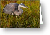 Looking To The Light Greeting Cards - Great Blue Heron Stalking. Greeting Card by Eric Stogner