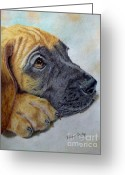 One Animal Painting Greeting Cards - Great Dane Puppy Greeting Card by Karen Curley