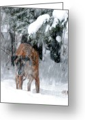 Snow Storm Prints Greeting Cards - Great Dane Rufus Looking into a Blizzard Greeting Card by Lila Fisher-Wenzel