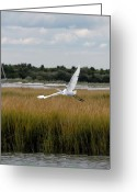 Great Egret Greeting Cards Greeting Cards - Great Egret 137 Greeting Card by Joyce StJames