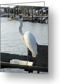 Great Egret Greeting Cards Greeting Cards - Great Egret 25 Greeting Card by Joyce StJames