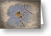 Egret Digital Art Greeting Cards - Great Egret Landing Greeting Card by J Larry Walker