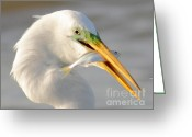Capture Greeting Cards - Great Egret With A Shad Greeting Card by Robert Frederick