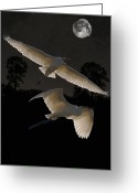 Lesvos Greeting Cards - Great Egrets In Flight Greeting Card by Eric Kempson