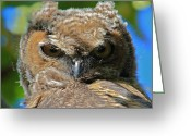 Owl Prints Greeting Cards - Great Horned Chick Greeting Card by Paul Marto