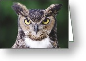 Watchful Eye Greeting Cards - Great Horned Owl Bubo Virginianus Greeting Card by Gerry Ellis