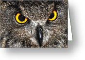 Large Bird Drawings Greeting Cards - Great Horned Owl Greeting Card by Diane E Berry
