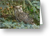Owl Photography Greeting Cards - Great Horned Owl Greeting Card by James Steele