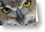 Stippling Greeting Cards - Great Horned Owl Greeting Card by Janeen Wassink Searles