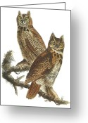 Great Painting Greeting Cards - Great Horned Owl Greeting Card by John James Audubon