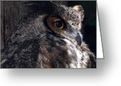 Cat Profile Greeting Cards - Great Horned Owl Greeting Card by Paul Ward