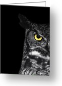 Raptor Photography Greeting Cards - Great Horned Owl Photo Greeting Card by Stephanie McDowell