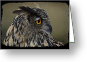 Birds Eye Greeting Cards - Great Horned Owl Greeting Card by Steven  Michael