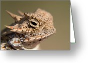 Horned Lizard Greeting Cards - Great Horny Toad Greeting Card by Steven Love