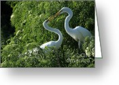 Courting Greeting Cards - Great White Egret Lovers Greeting Card by Sabrina L Ryan
