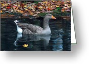 Goose Drawings Greeting Cards - Great White-fronted Goose Greeting Card by Brent Ander