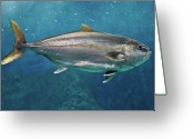Swimming Photo Greeting Cards - Greater Amberjack Greeting Card by Stavros Markopoulos