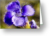 Blue Petals Greeting Cards - Greater Fringed Gentian Greeting Card by Teresa Zieba