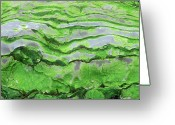 National Greeting Cards - Green Algae Patterns On Exposed Rock At Low Tide, Gros Morne National Park, Ontario, Canada Greeting Card by Altrendo Nature