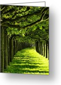 Tree Allee Greeting Cards - Green Allee Greeting Card by Tanja Cathrin  Liebig