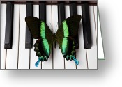 Pianos Greeting Cards - Green and black butterfly on piano keys Greeting Card by Garry Gay
