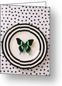 Plates Greeting Cards - Green and black butterfly on plate Greeting Card by Garry Gay