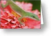 Green Day Greeting Cards - Green And Pink In Garden Greeting Card by Jeff R Clow
