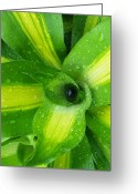 Graden Digital Art Greeting Cards - Green and Yellow Beauty I I Greeting Card by Sheri McLeroy