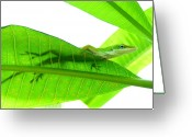 Green Day Greeting Cards - Green Anole On Leaf With Silhouette Greeting Card by Joseph Connors