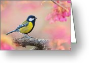 Pink Flower Branch Greeting Cards - Green-backed Tit Greeting Card by Fuyi