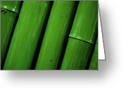 Bamboo Greeting Cards - Green Bamboo Greeting Card by Megan Ahrens