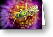 Aster  Greeting Cards - Green Bee Greeting Card by Vicki Jauron