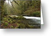 Battleground Greeting Cards - Green by the River Greeting Card by Idaho Scenic Images Linda Lantzy