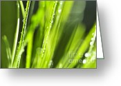 Growing Water Greeting Cards - Green dewy grass  Greeting Card by Elena Elisseeva
