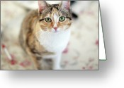 Staring Greeting Cards - Green Eyed Cat On Cloth On Table Greeting Card by Les Hirondelles Photography