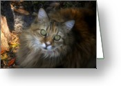 Coon Greeting Cards - Green Eyed Maine Coon Greeting Card by David Lee Thompson