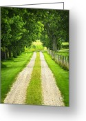 Windy Greeting Cards - Green farm road Greeting Card by Elena Elisseeva