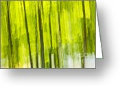 Tree Lines Greeting Cards - Green forest abstract Greeting Card by Elena Elisseeva