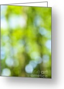 Outdoor Canopy Greeting Cards - Green forest and blue sky Greeting Card by Elena Elisseeva